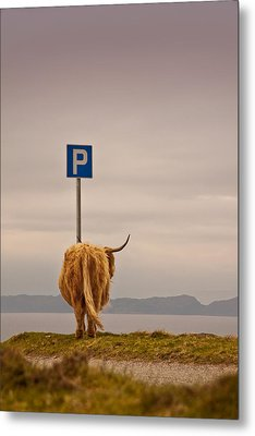 Her Favourite Pick-nick Spot In The Highlands Metal Print by Dorit Fuhg