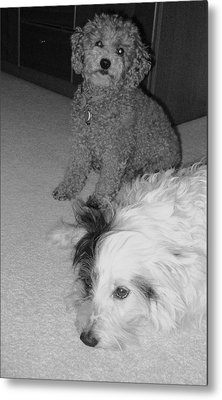 Metal Print featuring the photograph Her Last Day Sparky Stays by Brenda Pressnall