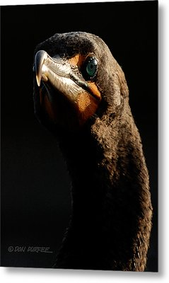 Metal Print featuring the photograph Here's Lookin At You by Don Durfee