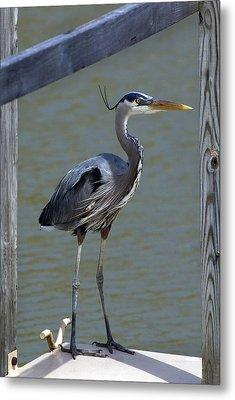 Heron Standing Metal Print