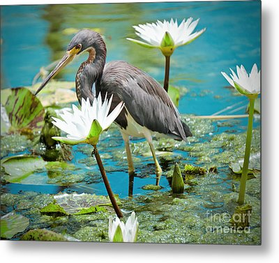 Heron With Water Lillies Metal Print