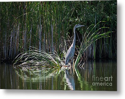 Heron's Home Metal Print