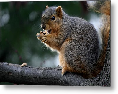Hey  The Guy With Peanuts Metal Print by Martin Morehead