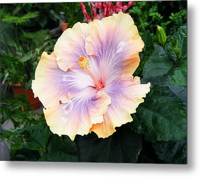 Metal Print featuring the photograph Hibiscus by Margie Avellino