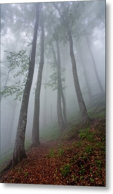 High Forest Metal Print by Evgeni Dinev