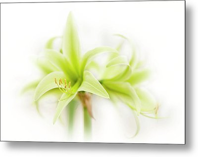 Hippeastrum  Evergreen Metal Print