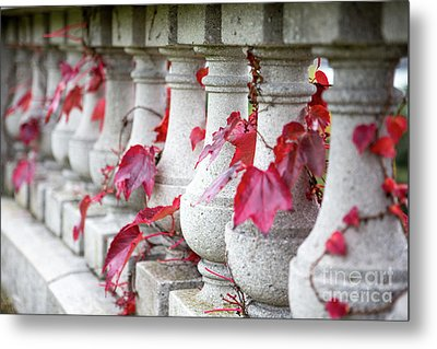 Holding On  Metal Print by A New Focus Photography