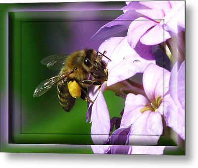 Honey Bee Metal Print by Deborah Johnson