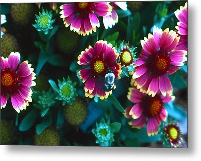 Metal Print featuring the photograph Honeybee And Flowers by Lori Miller