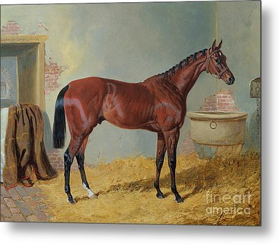 Horse In A Stable Metal Print by John Frederick Herring Snr