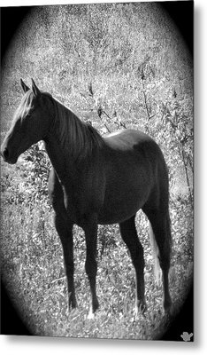 Horse Scope Metal Print by Debra     Vatalaro