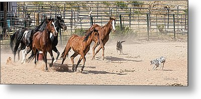 Horses Unlimited #3a Metal Print