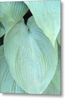 Metal Print featuring the photograph Hosta by Beth Akerman