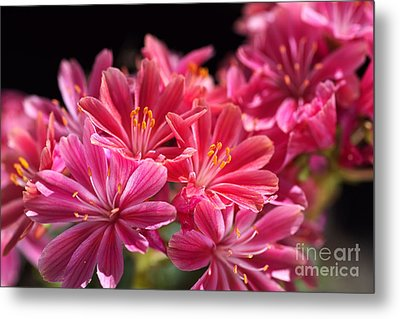 Hot Glowing Pink Delight Of Flowers Metal Print