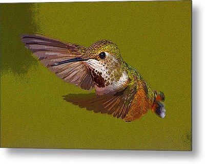 Hummingbird In Flight- Abstract Metal Print by Tim Grams