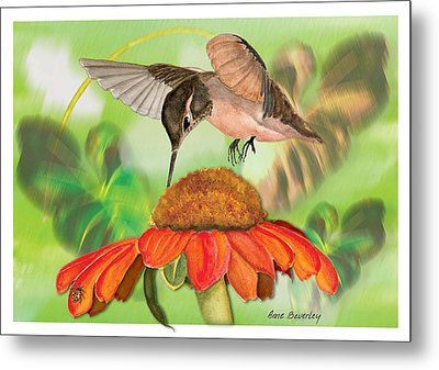 Metal Print featuring the painting Hummingbird On Flower by Anne Beverley-Stamps