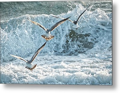 Hunting The Waves Metal Print by Don Durfee