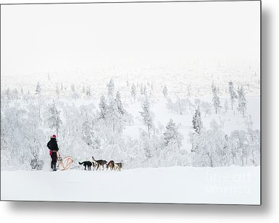 Metal Print featuring the photograph Husky Safari by Delphimages Photo Creations