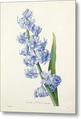 Hyacinth Metal Print by Pierre Joseph Redoute