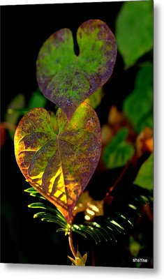 I See You In A New Light Metal Print