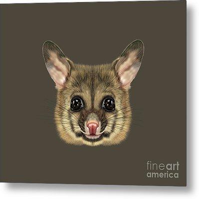 Illustrated Portrait Of Common Brushtail Possum.  Metal Print