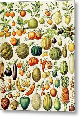 Illustration Of Fruit Metal Print by Adolphe Philippe Millot