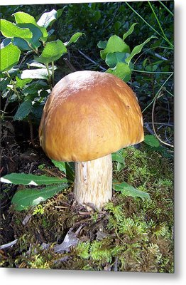 Metal Print featuring the photograph I'm A Mushroom by Angi Parks
