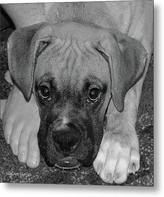 Impawsible Metal Print by DigiArt Diaries by Vicky B Fuller