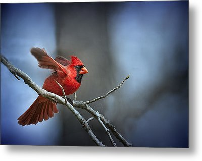 In The Still Of The Night . . . Metal Print by Bonnie Barry
