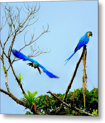 In The Wild Metal Print by Karen Wiles