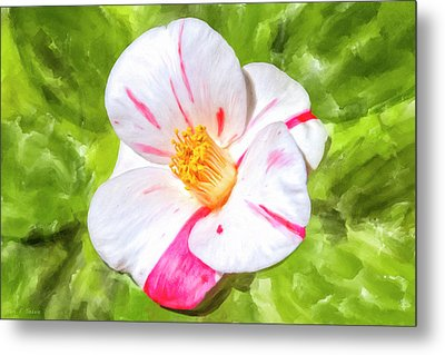 Metal Print featuring the mixed media In The Winter Garden - Camellia Blossom by Mark Tisdale