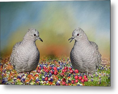 Metal Print featuring the photograph Inca Doves by Bonnie Barry