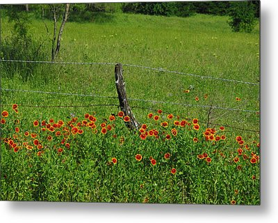 Indian Blanket Fence Metal Print by Robyn Stacey