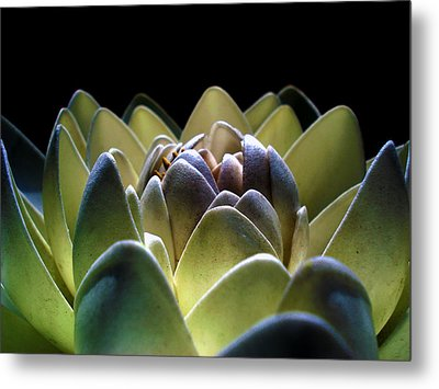 Indonesian White Lotus Metal Print