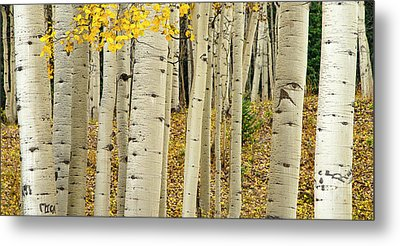 Metal Print featuring the photograph Into The Forest by Gary Lengyel