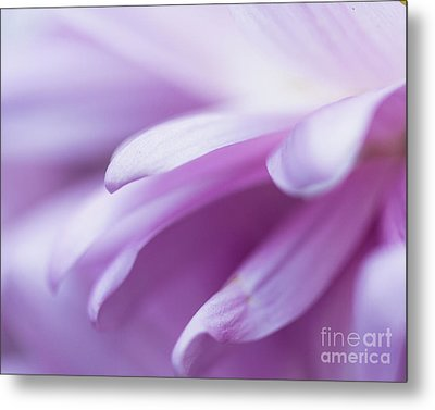 Into The Softness Metal Print