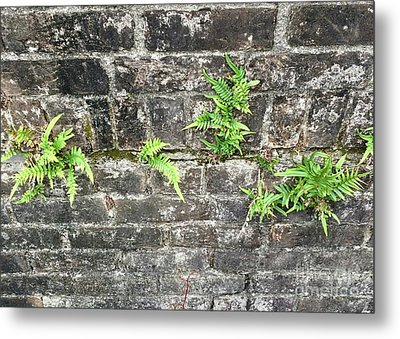 Metal Print featuring the photograph Intrepid Ferns by Kim Nelson