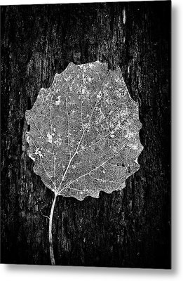 Intricate  Metal Print by Karen Stahlros