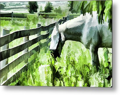 Iowa Farm Pasture And White Horse Metal Print by Wilma Birdwell