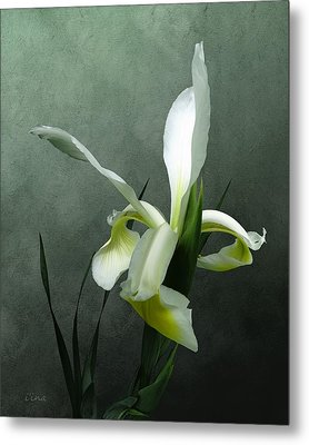 Iris Celebration Metal Print by I\'ina Van Lawick