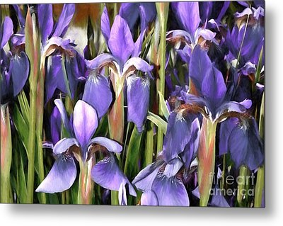 Metal Print featuring the photograph Iris Fantasy by Benanne Stiens