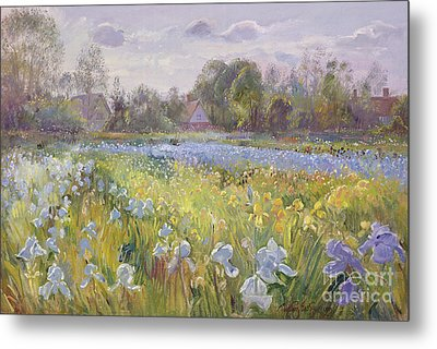Iris Field In The Evening Light Metal Print by Timothy Easton