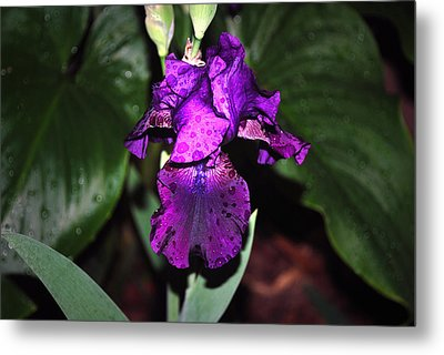 Iris Metal Print by M Ryan