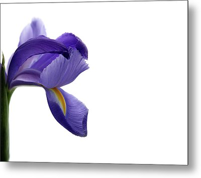 Metal Print featuring the photograph Iris by Marie Leslie