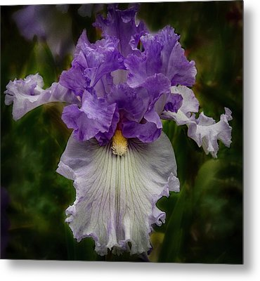 Metal Print featuring the photograph Iris Standout by Jean Noren