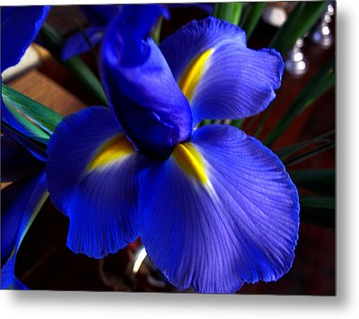 Metal Print featuring the photograph Iris Unfolding by Paul Cutright