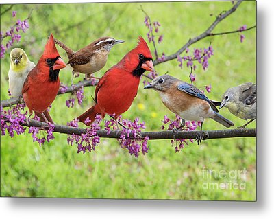 Is It Spring Yet? Metal Print by Bonnie Barry