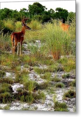 Island Deer Metal Print by Michael Shreves