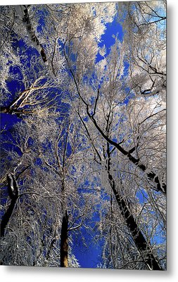 I've Heard Thee Metal Print by JCYoung MacroXscape