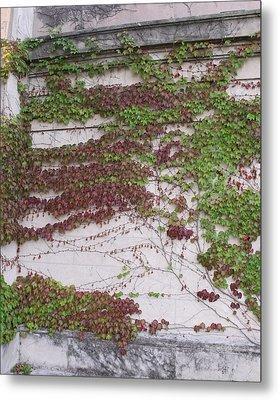 Ivy Wall I Metal Print by Anna Villarreal Garbis